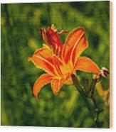 Orange Daylily Flower 4 Wood Print