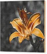 Orange Daylily Flower On Gray 3 Wood Print