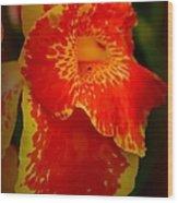 Orange Delight Wood Print by Debra Forand