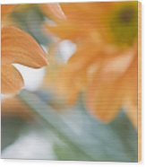 Orange Design. Paintrly Chrysanthemum  Wood Print