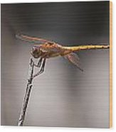 Orange Dragonfly Wood Print