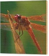 Orange Dragonfly Wood Print