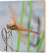 Orange Dragonfly On The Water's Edge Wood Print