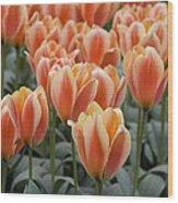 Orange Dutch Tulips Wood Print