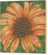 Orange Echinacea Wood Print
