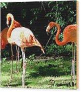 Orange Flamingo Wood Print