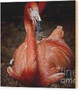 Orange Flamingo Nesting Wood Print