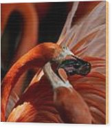 Orange Flamingos Conflict Resolution Wood Print