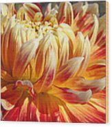 Orange Floral Art Dinner Plate Dahlia Flower Wood Print