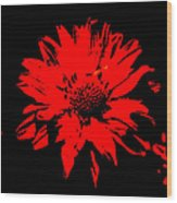 Orange Flower Burst  Wood Print