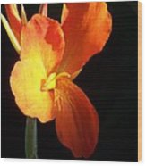 Orange Flower Canna Wood Print