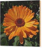 Orange Flower In The Garden Wood Print