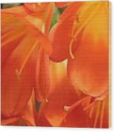 Orange Flower Petals Wood Print