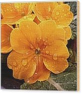 Orange flower with water drops Wood Print