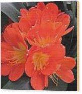 Bright Orange Flowers Wood Print