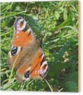 Orange Flutter Wood Print