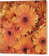 Orange Gerbera Daisies Wood Print