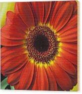 Orange Gerbera Wood Print