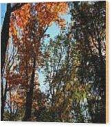 Orange Glowing Tree Wood Print