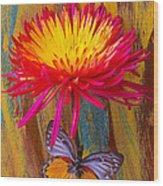 Orange Gray Butterfly On Mum Wood Print