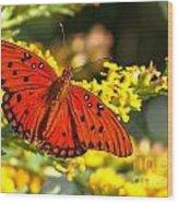 Orange Gulf Fritillary Wood Print