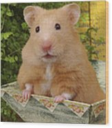 Orange Hamster Ha106 Wood Print