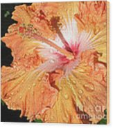Orange Hibiscus After The Rain Wood Print