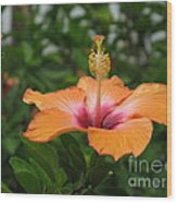 Orange Hibiscus Blossom Wood Print