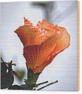 Orange Hibiscus Lax 2 Wood Print