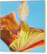 Orange Hibiscus Texture II Wood Print