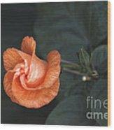 Orange Hibuscus Lax 1 Wood Print