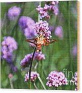 Orange Hummingbird Moth Wood Print