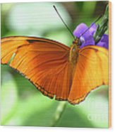 Orange Julia Butterfly Wood Print