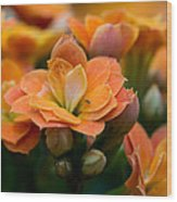 Orange Kalanchoe With Company Wood Print