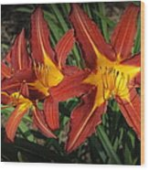 Orange Lillies Wood Print