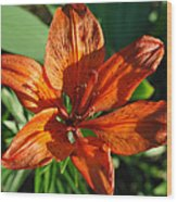 Orange Lilly Wood Print