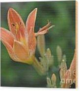 Orange Lily Photo 2 Wood Print