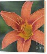 Orange Lily Photo 6 Wood Print