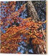 Orange Maple Wood Print
