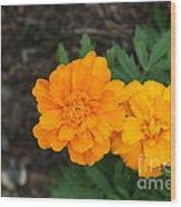 Orange Marigolds   # Wood Print