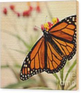 Orange Mariposa Wood Print