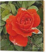 Orange Mini-rose Wood Print