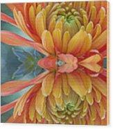 Orange Mum's Watery Reflection Wood Print