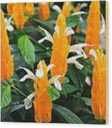 Orange Of Flowers Wood Print