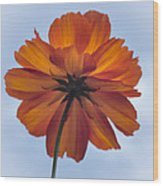 Orange On Blue Wood Print