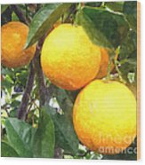 Orange On Tree Wood Print