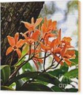 Orange Orchid Wood Print