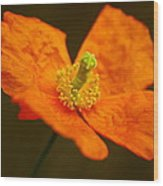 Orange Paper Poppy Wood Print