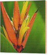 Orange Pocket Fold Wood Print