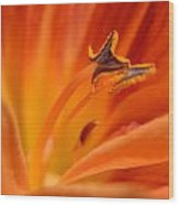 Orange Pollen Wood Print